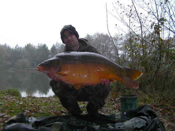 mandarin-34lb